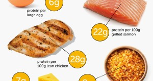 Sources of Protein Bodybuilding