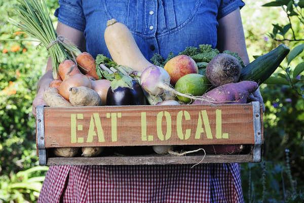 Organic-Farming-as-Environment-Friendly-Routine