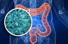 microbiota1