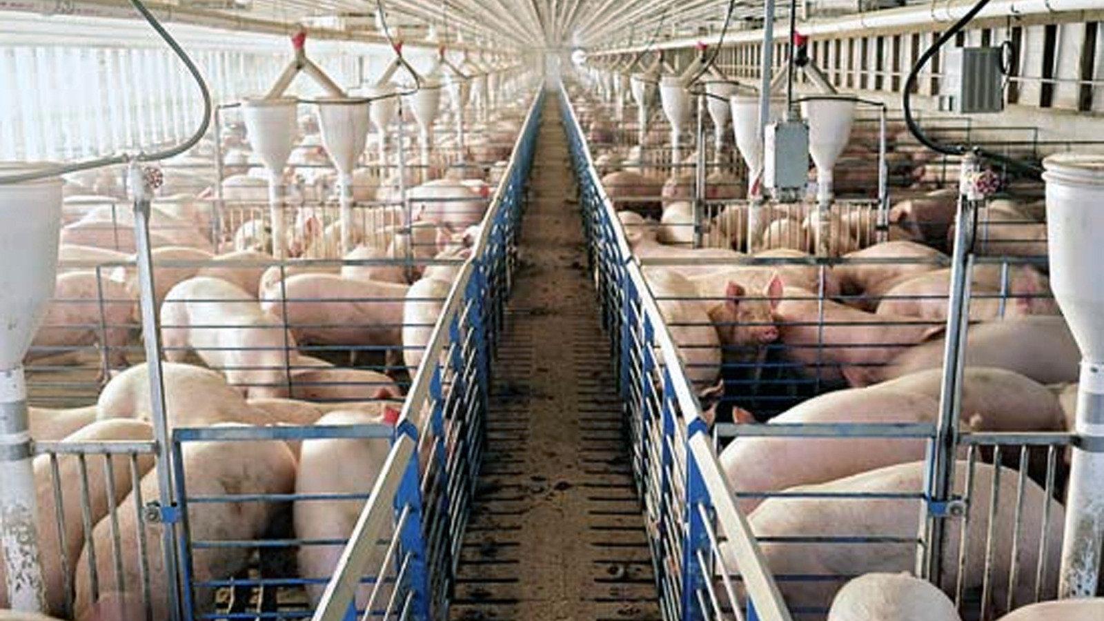 pork-indag